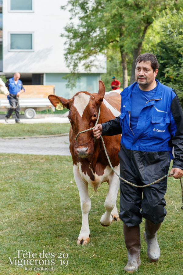 Arrivée des vaches à la ferme - Armaillis, espace-fribourgeois, ferme, Vaches, Photographies de la Fête des Vignerons 2019.