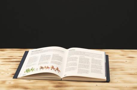 Livre du spectacle en 4 languesPhotographies de la Fête des Vignerons 2019.